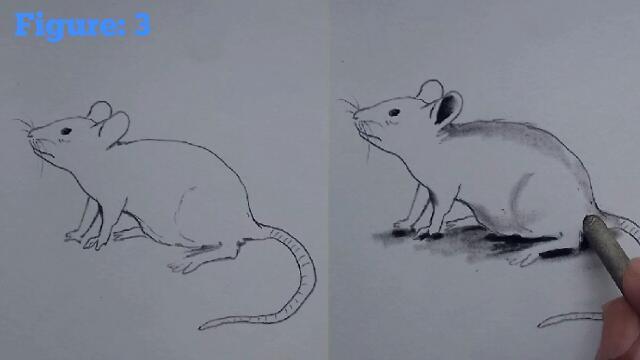 Rat drawing easy
