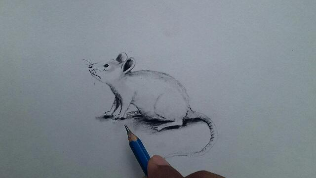 rat drawing easy